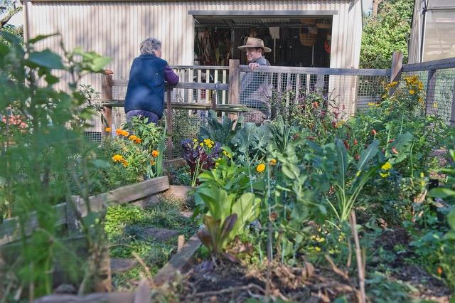 Turramurra Lookout Community Garden