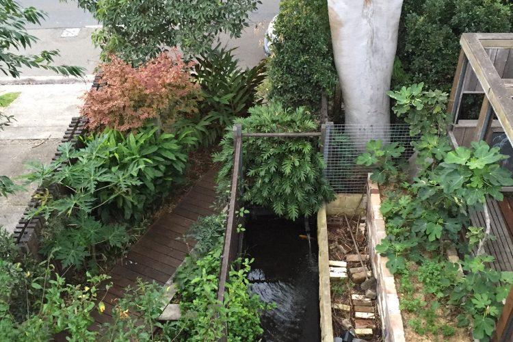 Seaforth – Chris's garden
