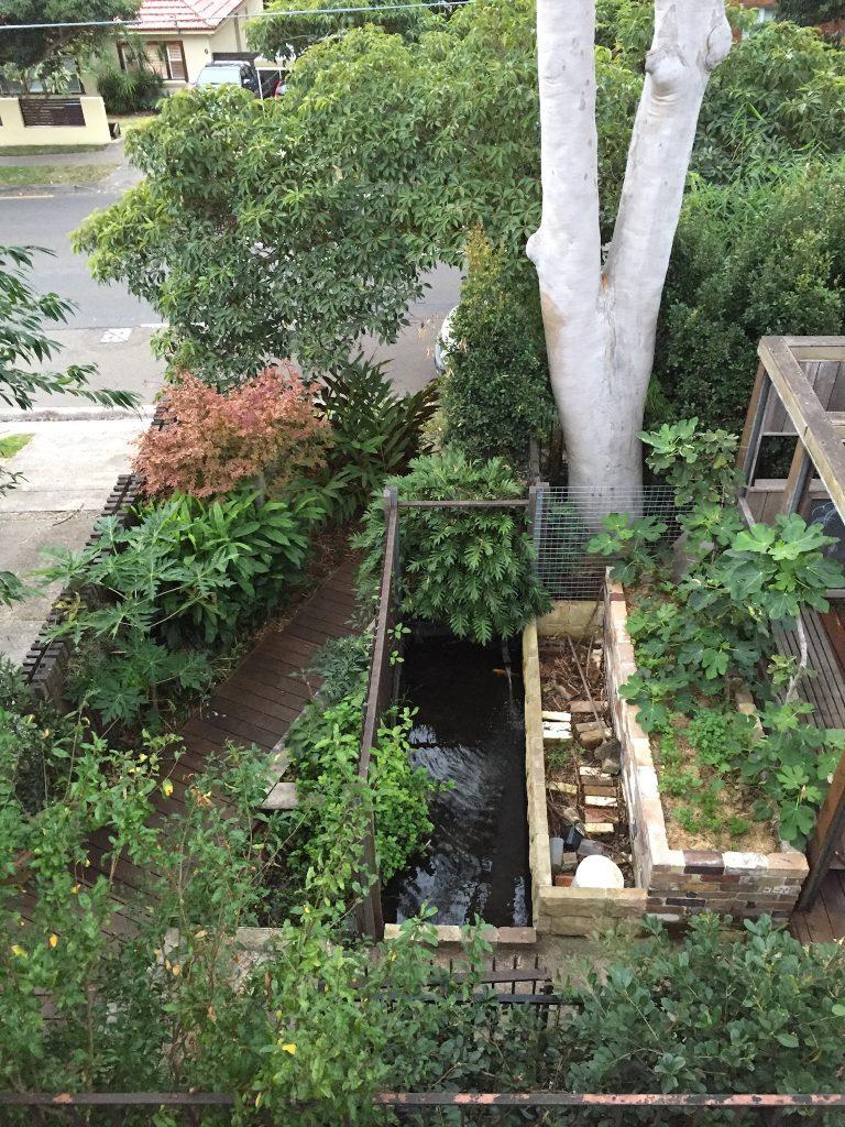 Sydney Edible Garden Trail - growing edible trees