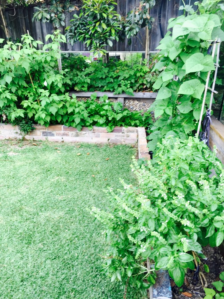 Sydney Edible Garden Trail - growing herbs and vegetables