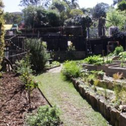Sydney Edible Garden Trail - Lane Cove garden