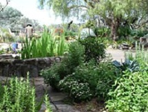 Sydney Edible Garden Trail - Coal Loader Cottage community garden