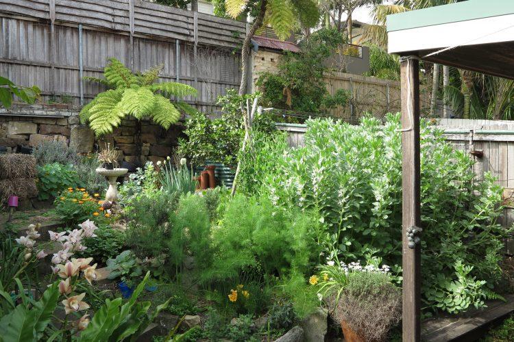 Fairlight – Rob's garden