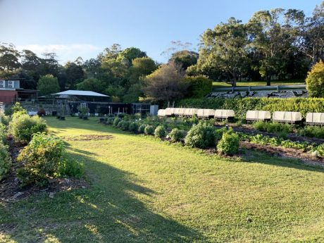 Sydney Edible Garden Trail - Henley Green community garden