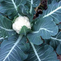 WD Image 4-crop