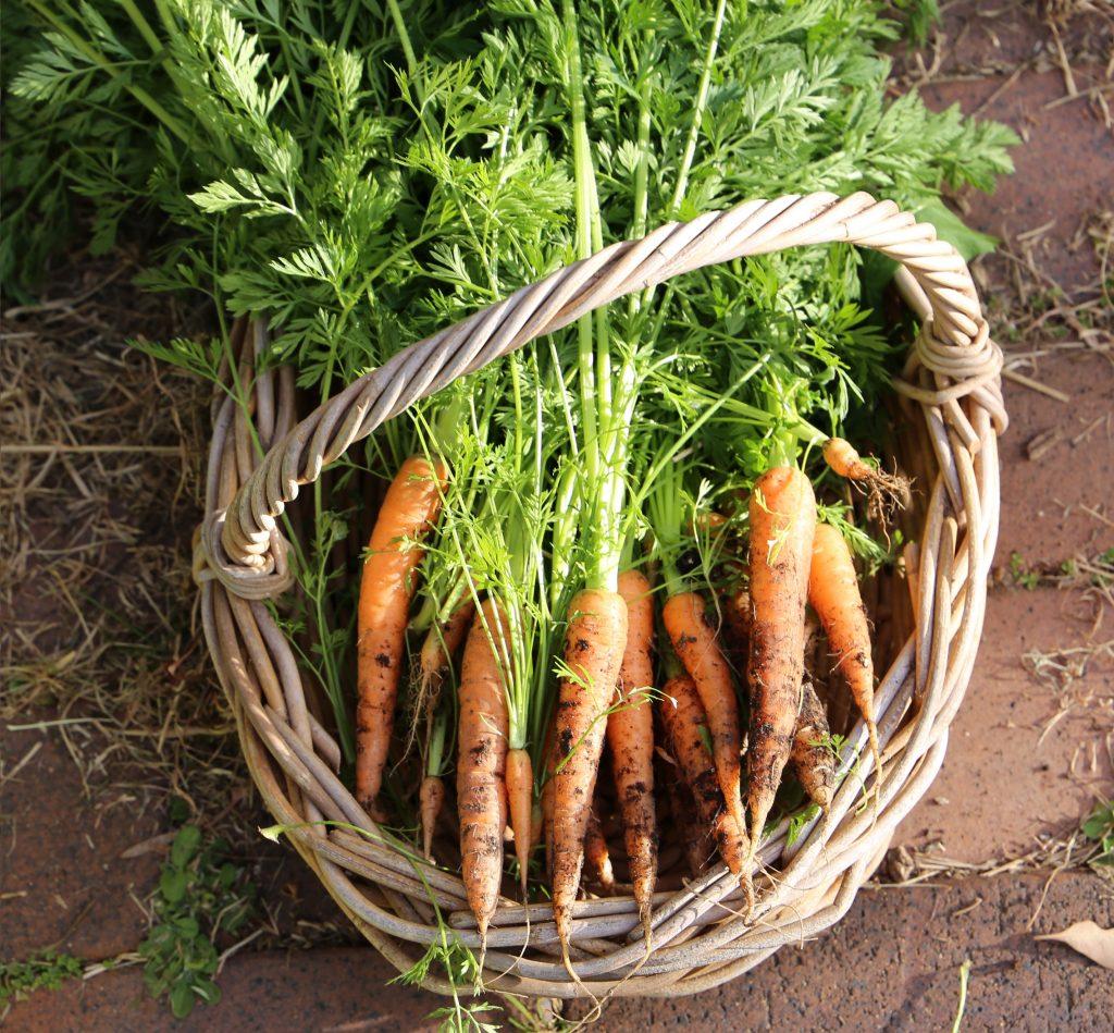 carrots - moss house