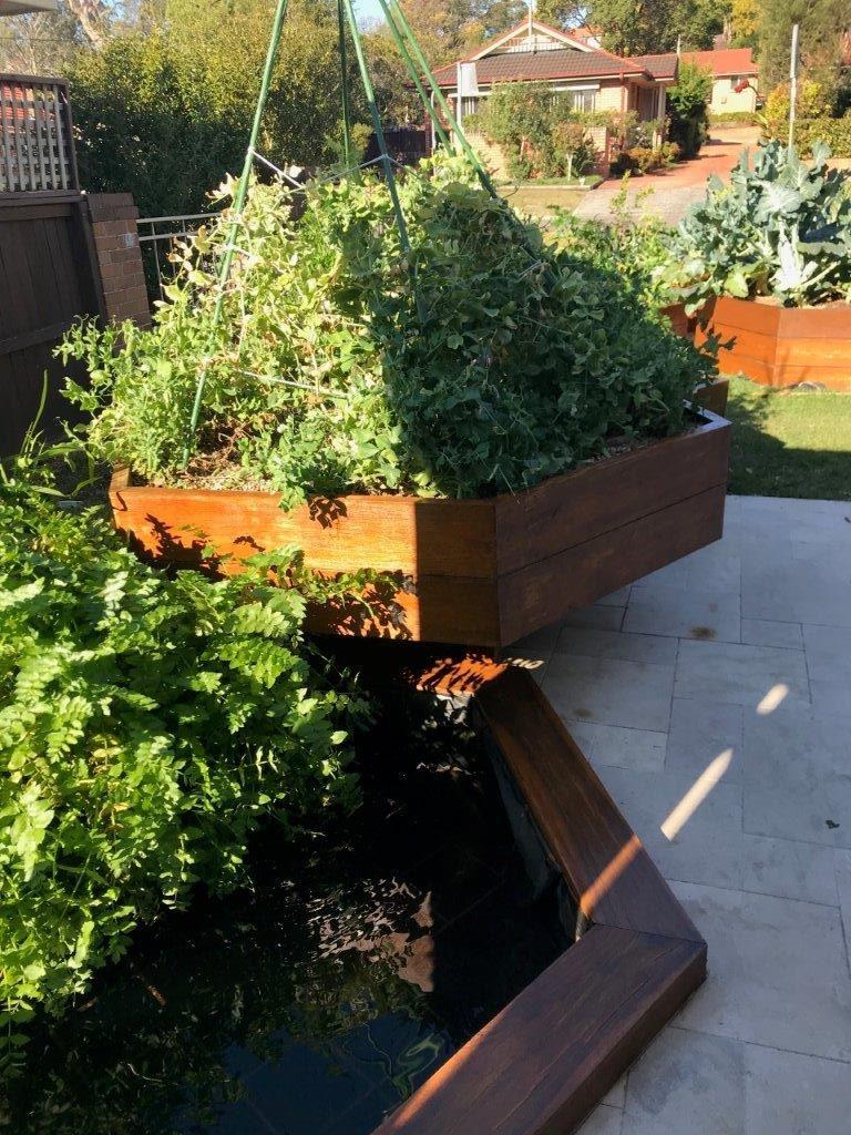wicking edible garden beds Lane Cove Sydney Edible Garden Trail