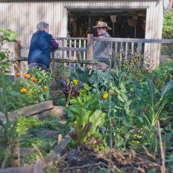 Sydney Edible Garden Trail - Turramurra Lookout Community Garden