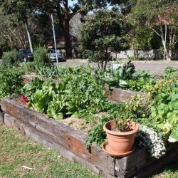 Sydney Edible Garden Trail - raised beds in the Naremburn community garden
