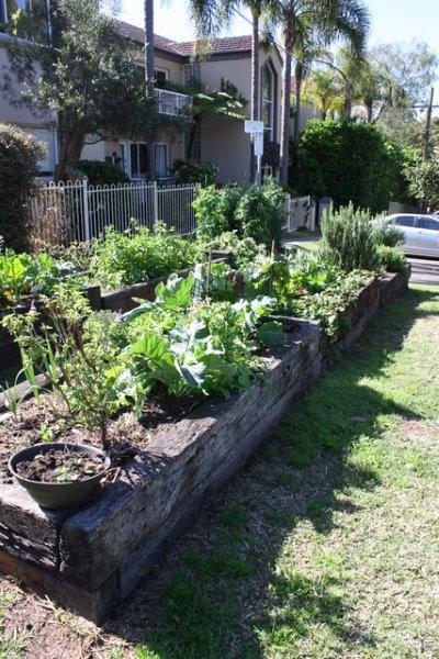 Sydney Edible Garden Trail - raised beds in the Naremburn community garden