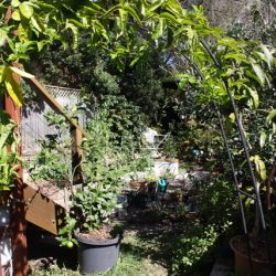 Sydney Edible Garden Trail - Edible garden growing in Naremburn