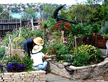Sydney Edible Garden Trail - Coal Loader Cottage community gardens