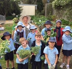 Lane Cove West Public School edible garden 6