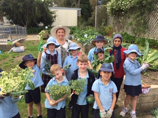 Lane Cove West Public School edible garden