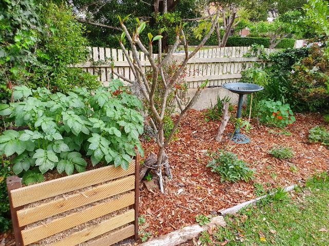 Sydney Edible Garden Trail - Killara edible garden