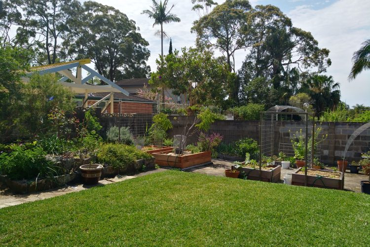 Killarney Heights – Ping's garden