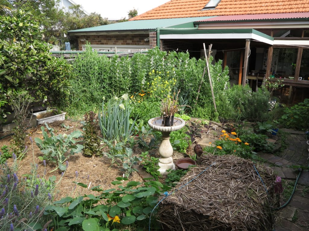 Sydney Edible Garden Trail - Northern Beaches edible garden