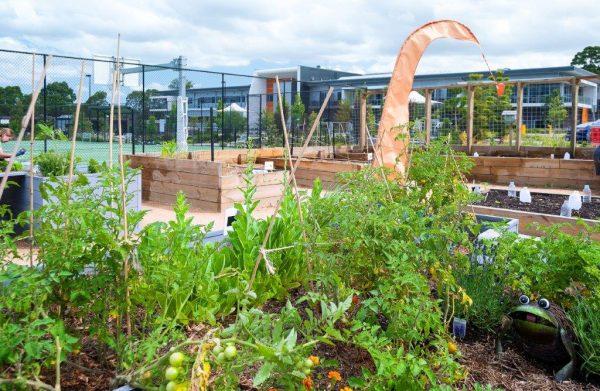 Sydney Edible Garden Trail - Royal Rehab Ryde productive garden