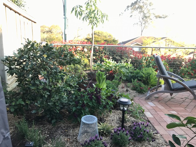 West Pennant Hills – Chantel's garden – The Compact Eatable Entertainer