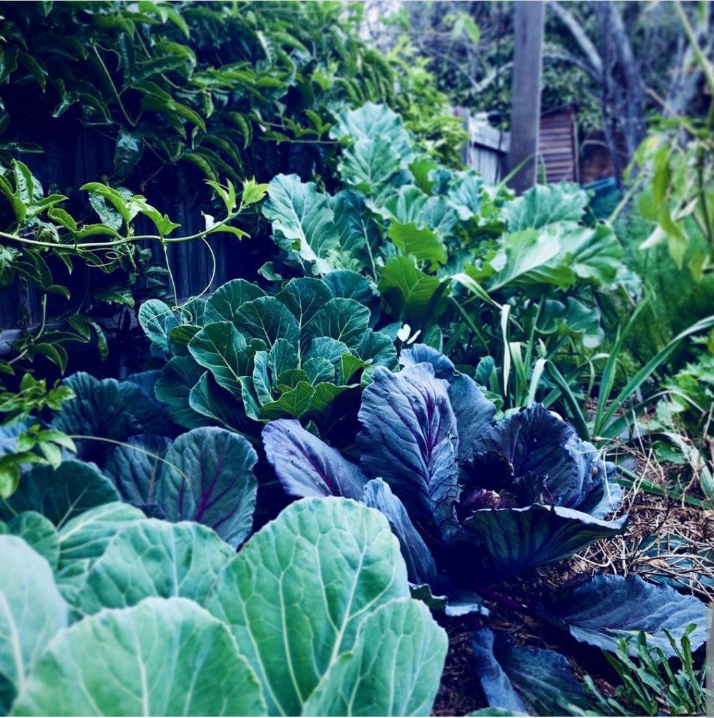 Sydney Edible Garden Trail - winter vegetables
