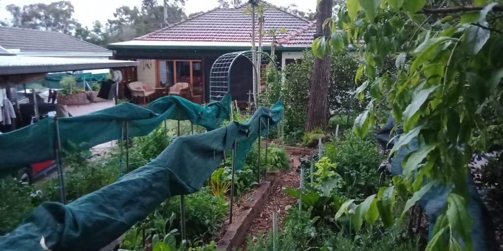 Sydney Edible Garden Trail - backyard edible garden