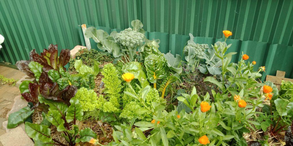 Sydney Edible Garden Trail - edible garden bed