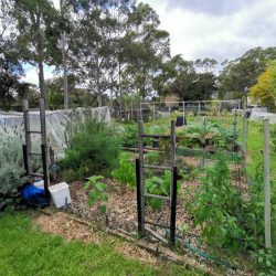 Sydney Edible Garden Trail - Macquarie community garden