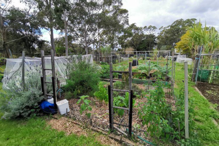 Marsfield – Macquarie Community Garden
