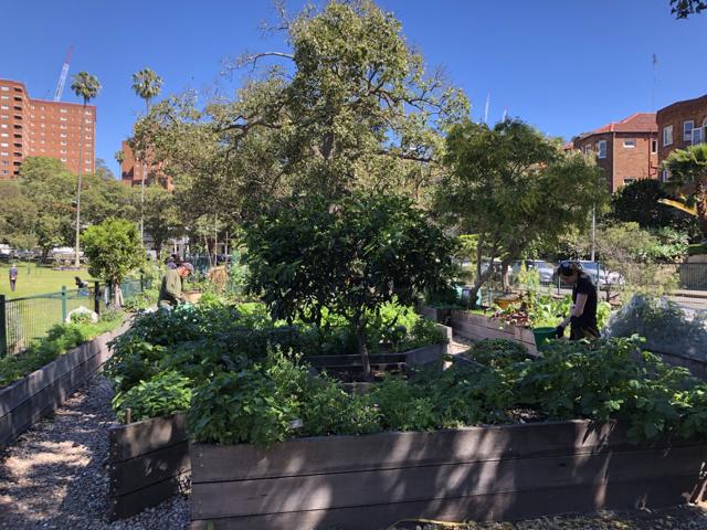 Sydney Edible Garden Trail - Milson community garden