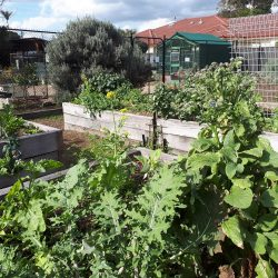 The Habitat community garden 4