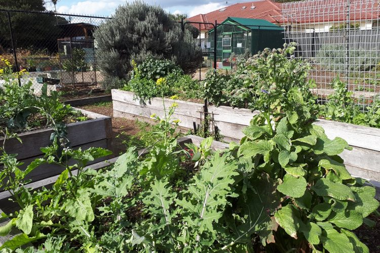 Ryde – The Habitat community garden