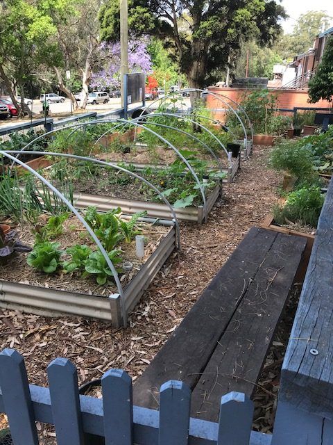 Sydney Edible Garden Trail - West Pymble Community Garden