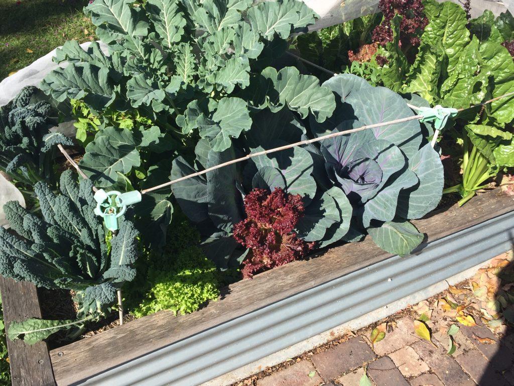 Sydney Edible Garden Trail - vegetables in a raised garden bed
