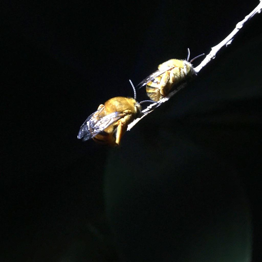 Sydney Edible Garden Trail - bees