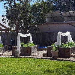 Sydney Edible Garden Trail - Binnowee Community Garden