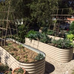 Sydney Edible Garden Trail - raised garden beds in a Lane Cove garden