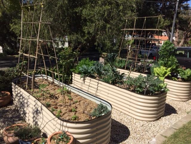 Sydney Edible Garden Trail - raised garden beds in a Lane Cove garden