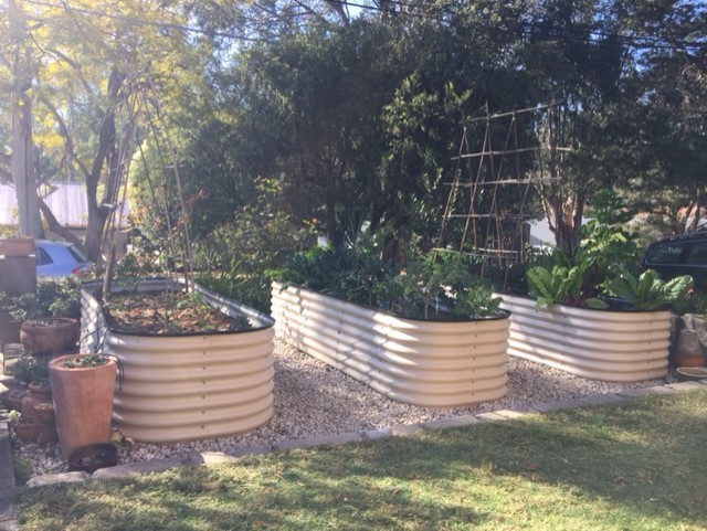 Sydney Edible Garden Trail - raised beds in Lane Cove