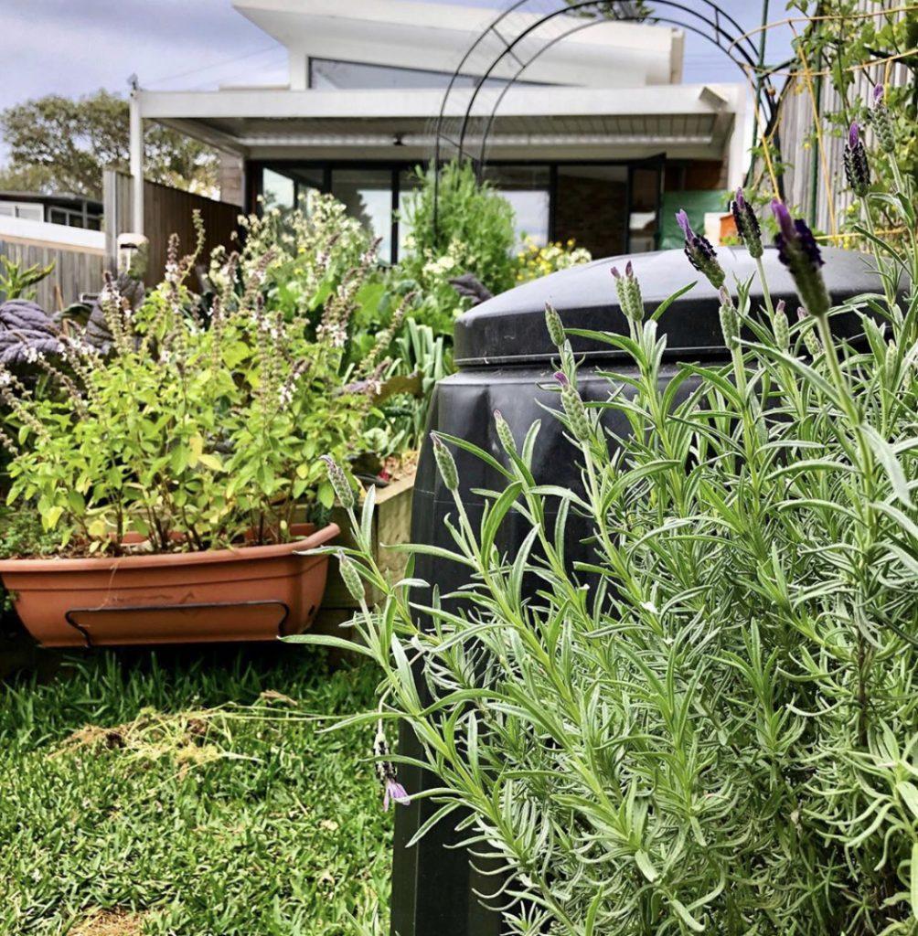 Sydney Edible Garden Trail - Manly edible garden