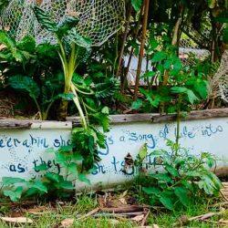 Sydney Edible Garden Trail - Dangar Island Community Garden