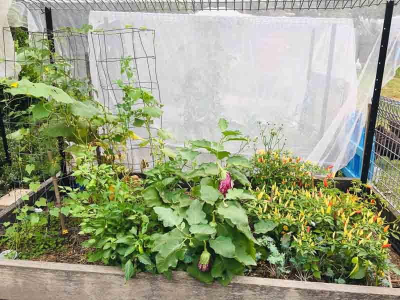 Sydney Edible Garden Trail - raised vegetable beds