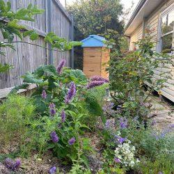 web Tara Mahoney garden 3