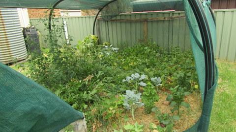 Sydney Edible Garden Trail - Under the Choko Tree garden