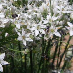 Stingless-bees