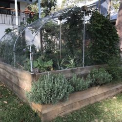 Sydney Edible Garden Trail - Balgowlah Heights veggie garden
