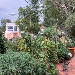 Sydney Edible Garden Trail - Seaforth garden