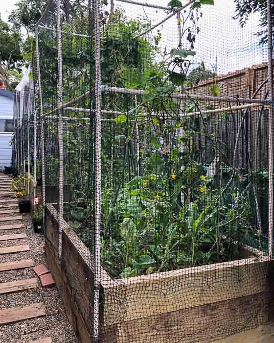 Sydney Edible Garden Trail - Driveway Veggie Patch