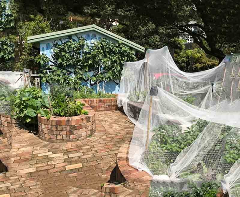 Sydney Edible Garden Trail - Garden Hub Community Garden