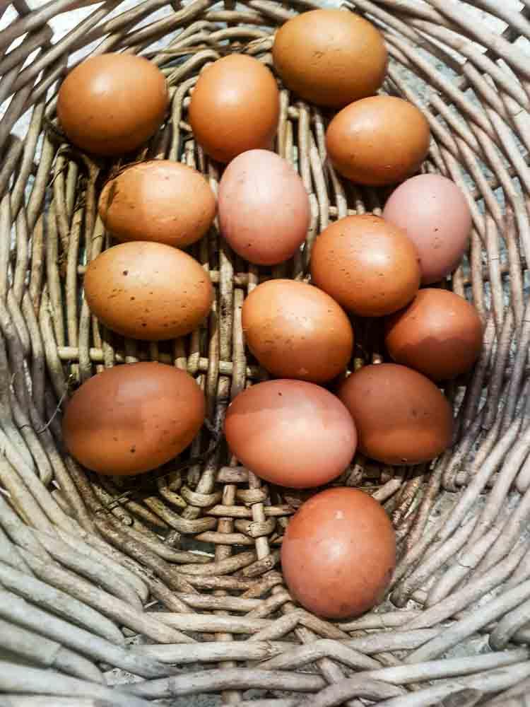 Sydney Edible Garden Trail - fresh eggs