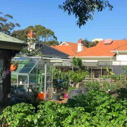 Sydney Edible Garden Trail - Mackie Lane Community Garden